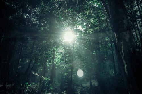 Featured Sunburst Forest Reflective Management Empathy Breakthrough
