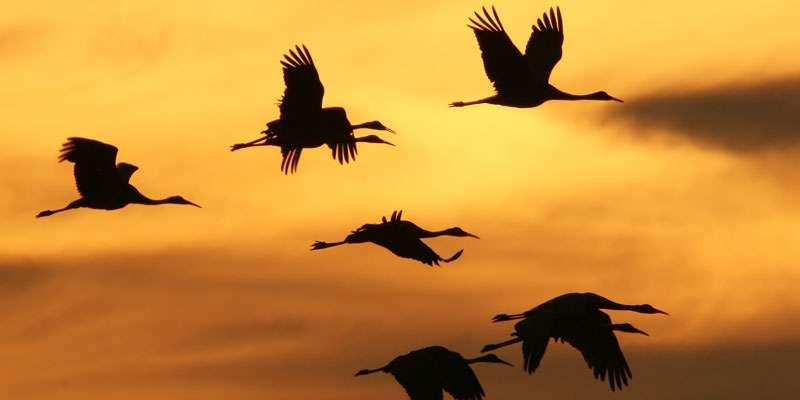 employee retention birds flying reflective management